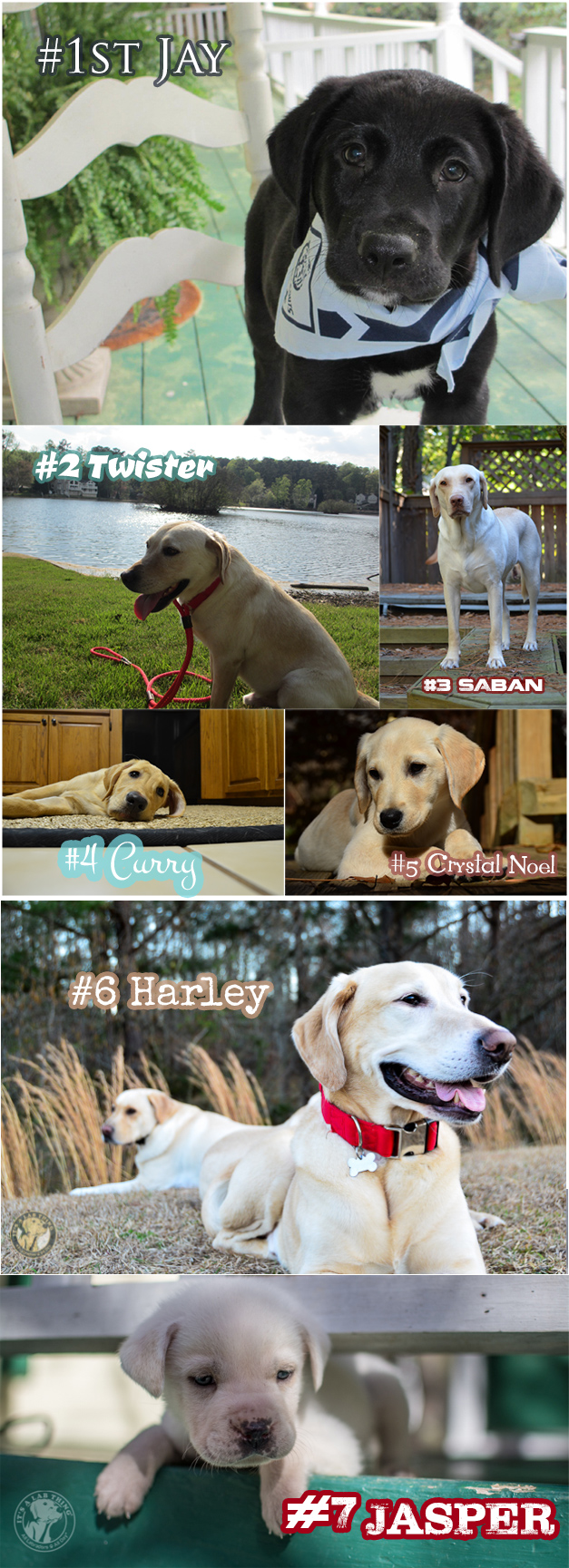 Labrador-Rescue-Foster-Board-It's-a-Lab-Thing