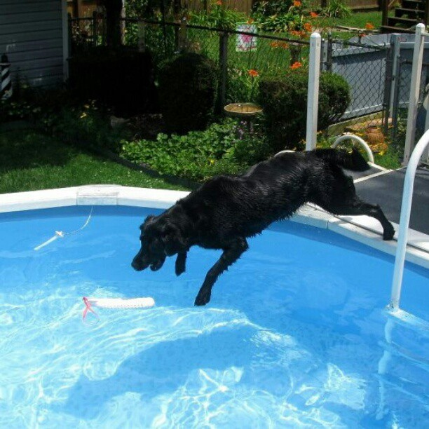 Bell Flops Into The Pool.