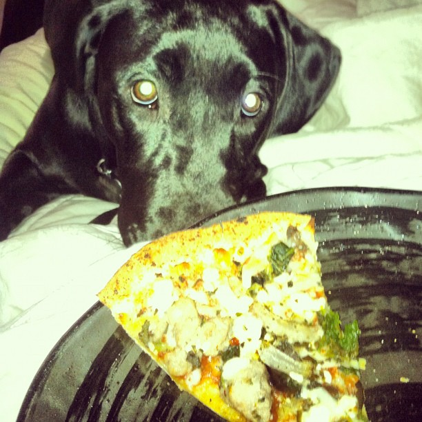 One? I can have one pizza? Pleaseeee