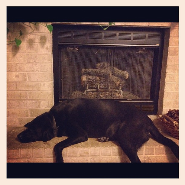 I always wanted a big fat  that laid on the hearth