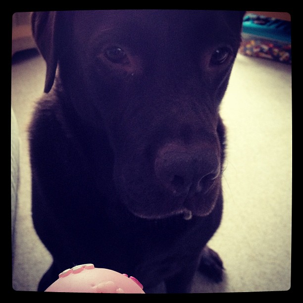 I know it's pink, but I still want that ball face!!
