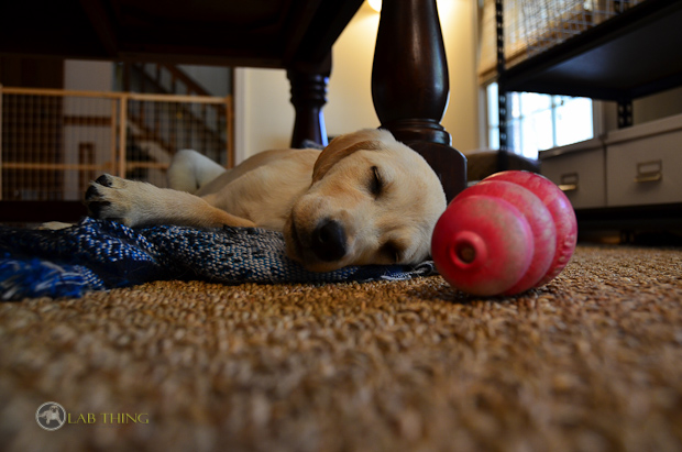 Its a Lab Thing Labrador Friends of the South Christmas Puppy Crystal Noel-14