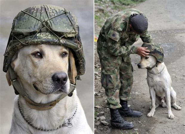 Its-a-Lab-Thing-Veterans-Day-Labradors002