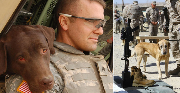 Its-a-Lab-Thing-Veterans-Day-Labradors003