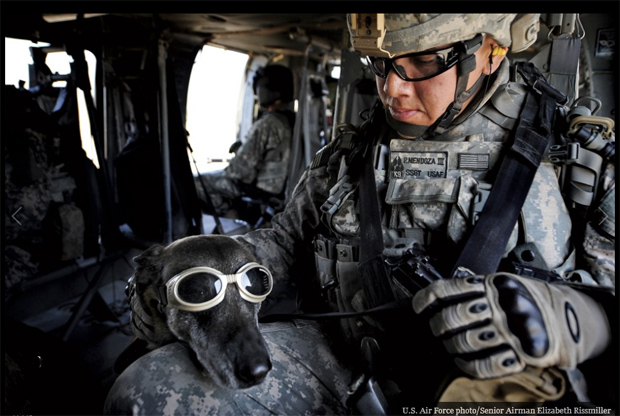 Its-a-Lab-Thing-Veterans-Day-Labradors005