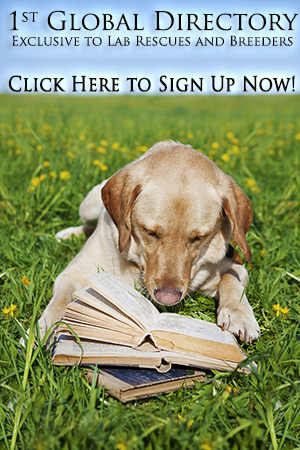 Its a Lab Thing Labrador Rescue Breeder Banner1