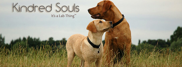 its a lab thing dad and pup labrador kindred souls web