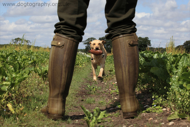 Its-a-Lab-Thing-Labrador-Dogtography-showcase-006