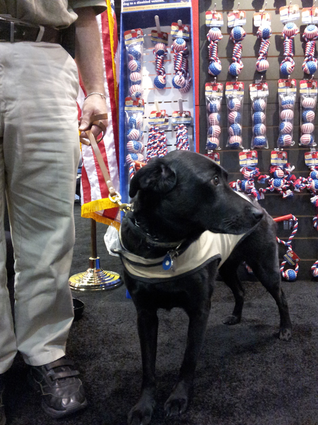 Its_a_Lab_Thing_Americas_vetdogs_global_pet_expo_labradors003