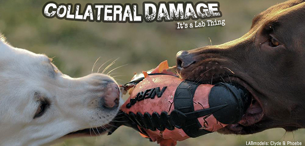 its a lab thing football labrador collateral damage web