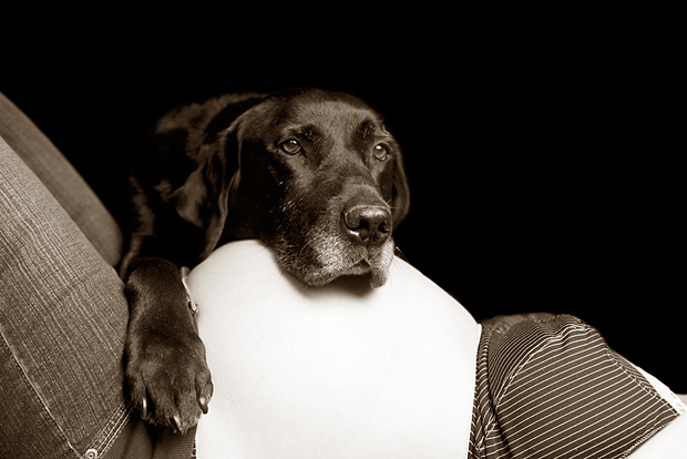 Its-a-Lab-Thing-Labrador-BeckyWilliams-Showcase-005