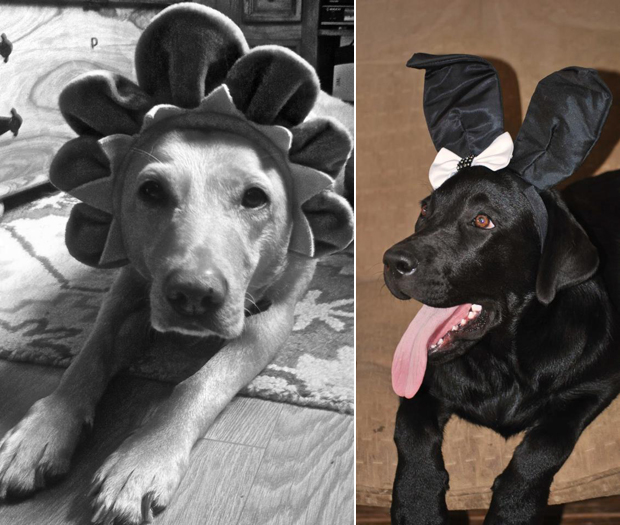 Its-a-Lab-Thing-Labrador-Easter-004