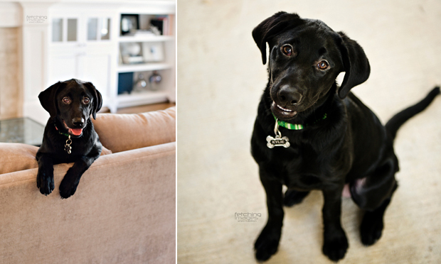 Its-a-Lab-Thing-Labrador-MelHammonds-LifeandDogs-007