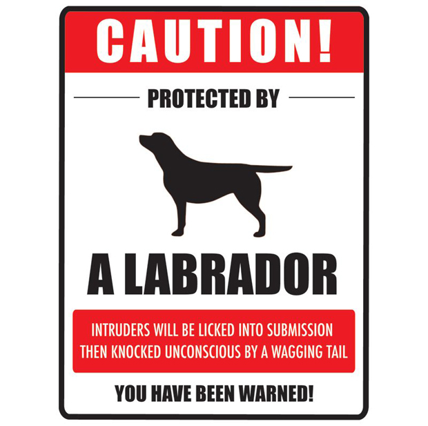 Its-a-Lab-LabCool-Labradors-Worldwide-002
