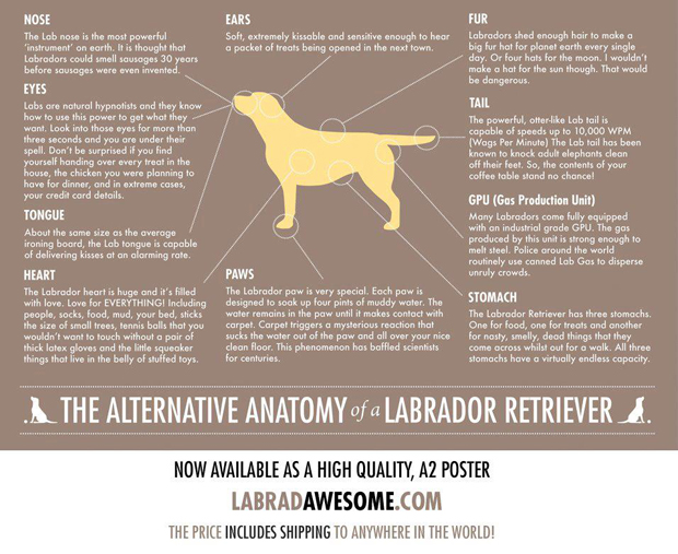 Its-a-Lab-LabCool-Labradors-Worldwide-003
