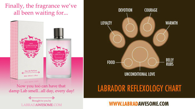 Its-a-Lab-LabCool-Labradors-Worldwide-006