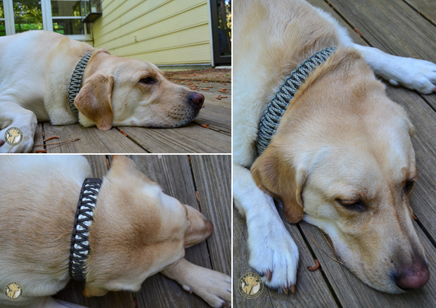 Its-a-Lab-Thing-LABoratory-Review-Extreme-Paracord-Dog-Collar007