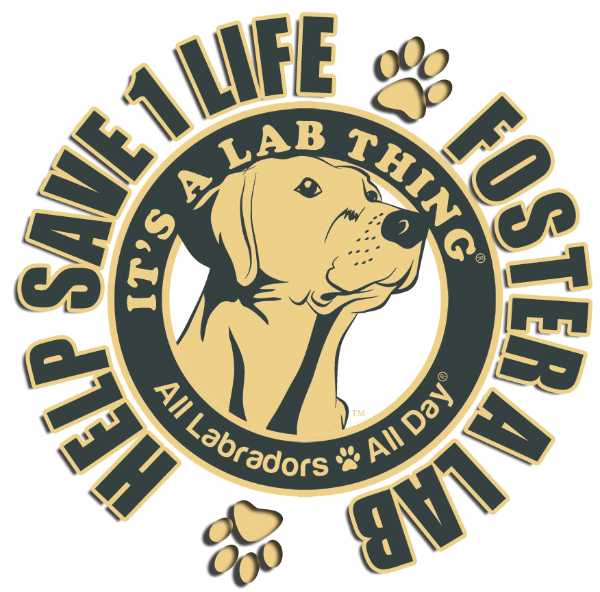 It's A Lab Thing Logo Foster