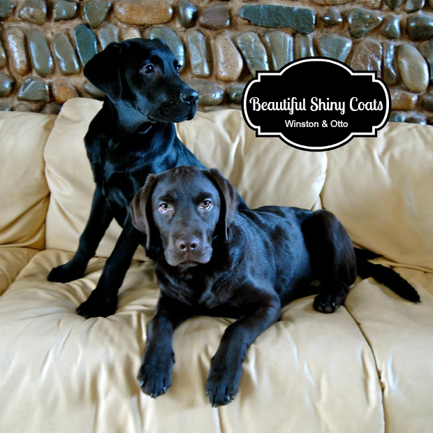 It's a Lab Thing Dear Labby Black Labradors Skin and Coat
