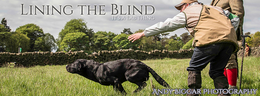 It's-a-Lab-Thing-Andy-Biggar-Dog-Photography-Lining-the-Blind-Labrador