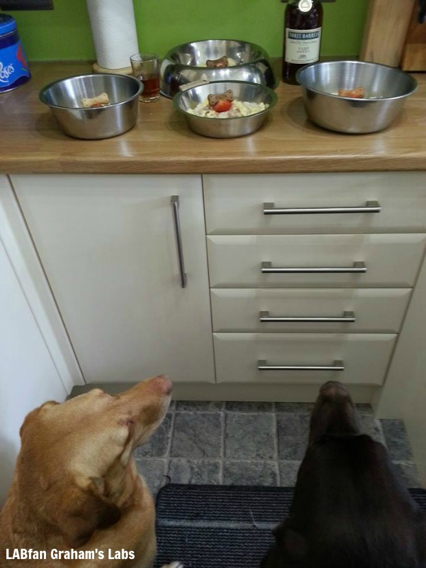 It's a Lab Thing Dear Labby Picky Eater Labrador (2)