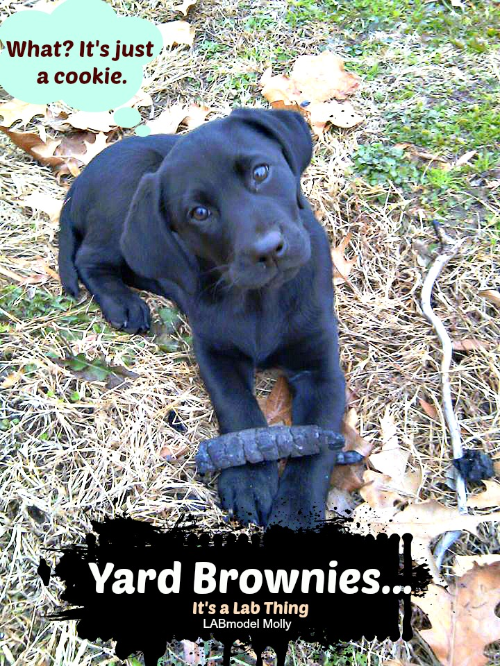 It's a Lab Thing Yard Brownies