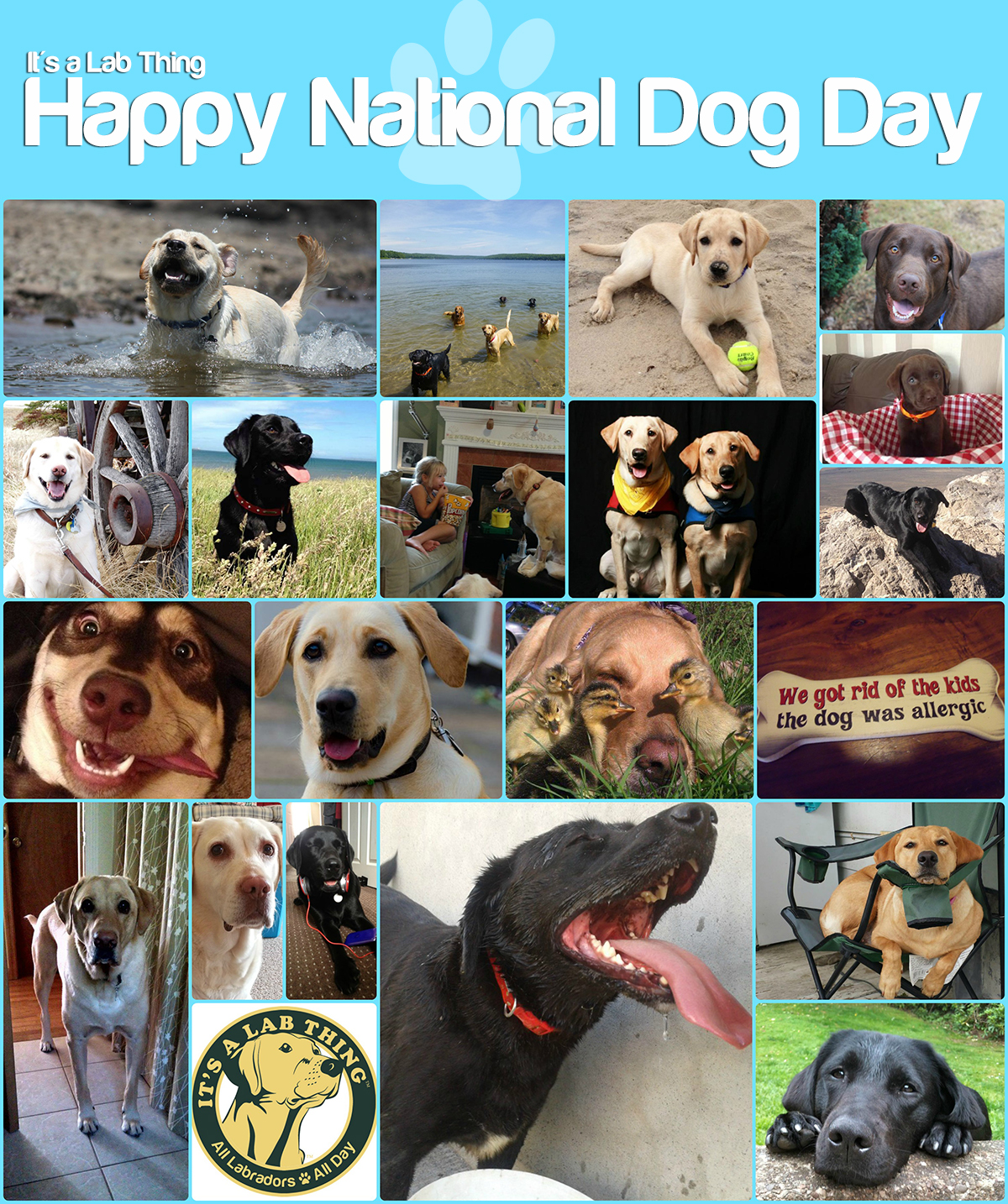 It's a Lab Thing National Dog Day Labradors web