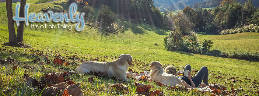 E-_Dropbox_AK-Folder_Asheville_Labradors-in-th-Country-Lab-Bliss-It's-a-Lab-Thing-FB