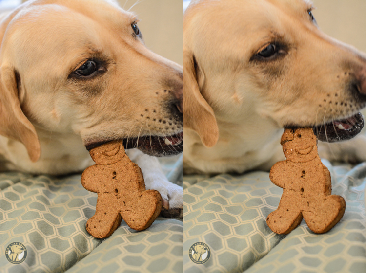 Cloudstar Holiday Buddy Biscuits dog treats (2)