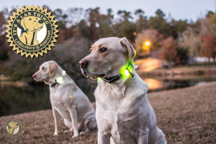 Glowdoggie LED waterproof Collars for Labradors and Dogs-20