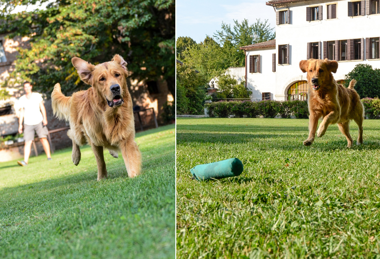 Dog Photography Class Italy FotoCoach with It's a Lab Thing and Andy Biggar (4)