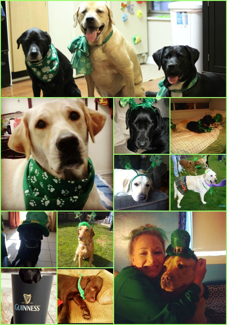 St. Patrick's Day Labradors on It's a Lab thing 1