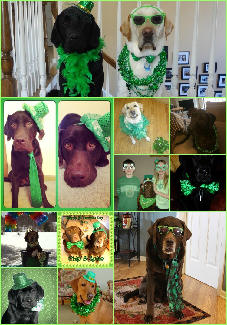 St. Patrick's Day Labradors on It's a Lab thing