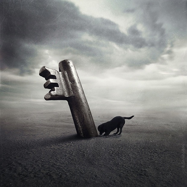 Shelter pets star in surreal portraits in an attempt to find homes Labrador 5