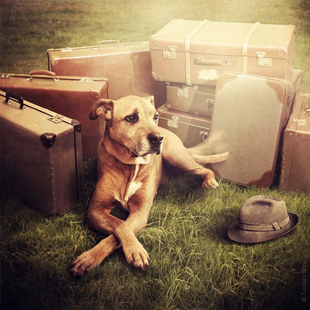 Shelter pets star in surreal portraits in an attempt to find homes Labrador 6