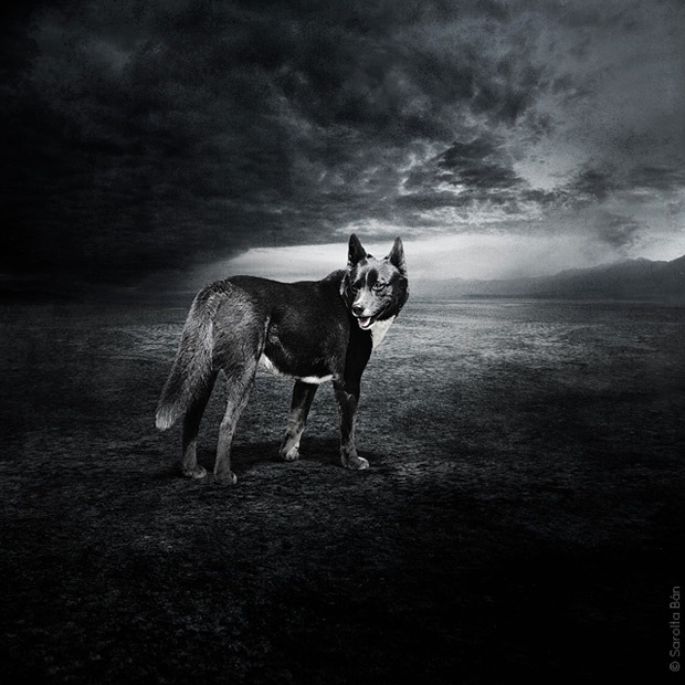 Shelter pets star in surreal portraits in an attempt to find homes Labrador 9