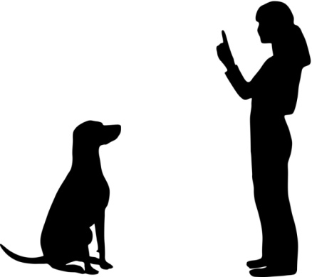 Dog Training and Obedience with dog trainer