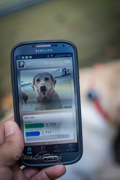 Starwalk Dog Activity  Tracker It's a Lab Thing Review-14