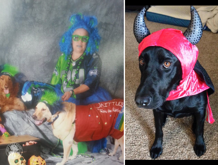 absolutely-cute-halloween-labradors-in-costumes-013
