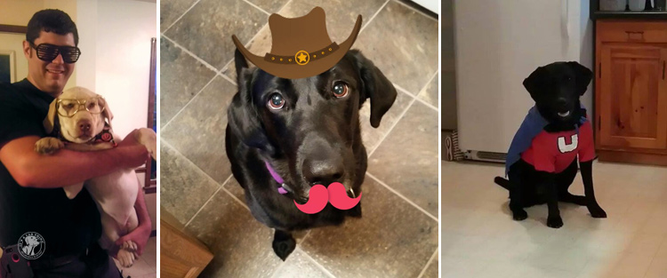 absolutely-cute-halloween-labradors-in-costumes-022