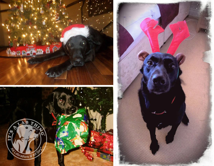 006-Christmas-Holiday-Labrador-Retrievers-Presents-Santa-