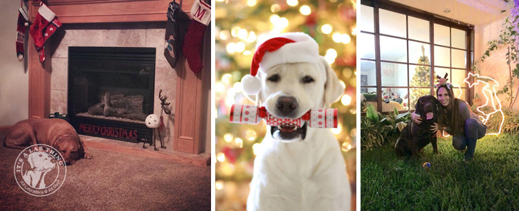 017-Christmas-Holiday-Labrador-Retrievers-Presents-Santa-