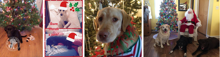021-Christmas-Holiday-Labrador-Retrievers-Presents-Santa-