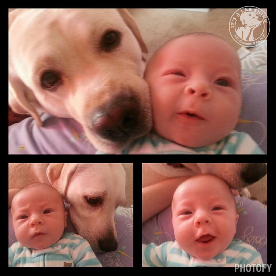 baby and labrador selfies