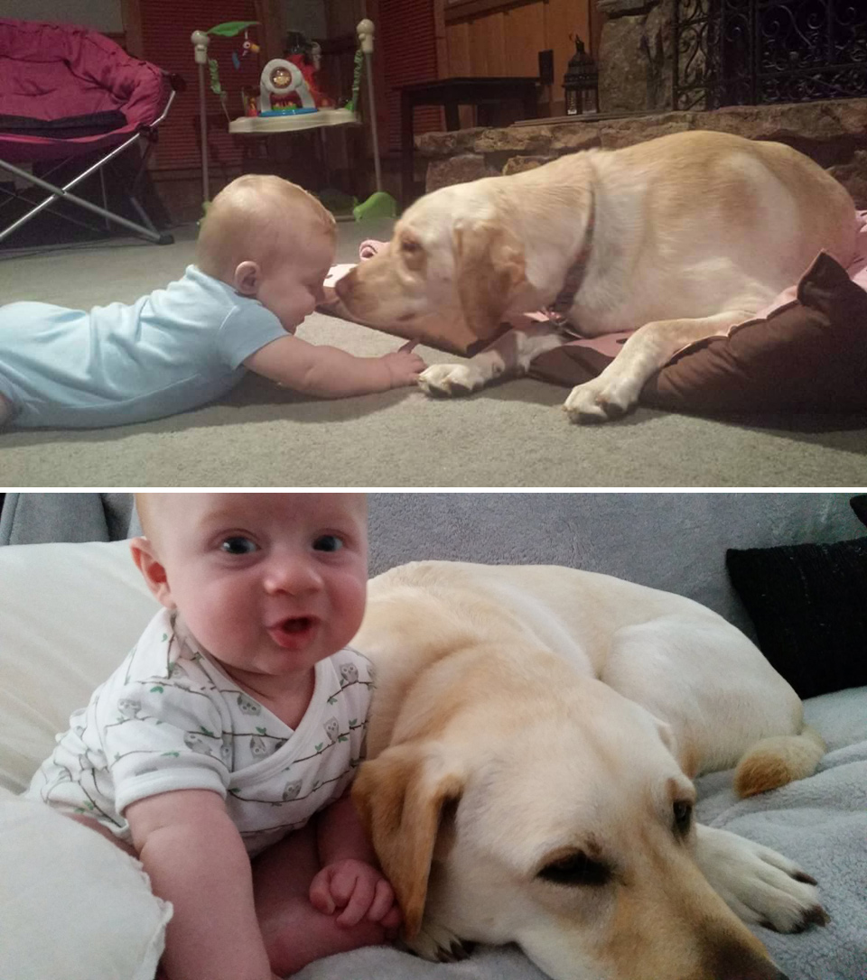 labrador and baby selfies