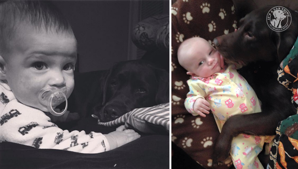 super cute babies with labrador retrievers