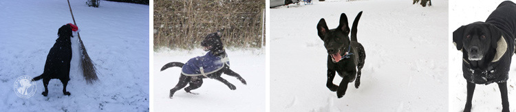 006-Winter_Play_Snow_blizzard_labrador_retrievers_