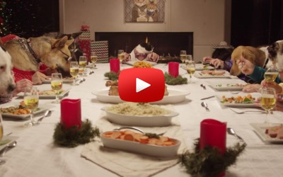 dogs_and_cats_eating_at_the_table_with_human_hands_viral_video_holiday_