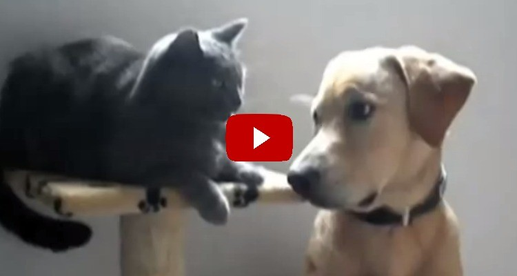 dogs_annoying_cats_with_their_friendship_and_playing